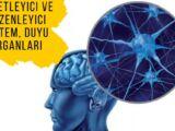 Sinir sistemi nedir?|Konu anlatımı |Biyoloji