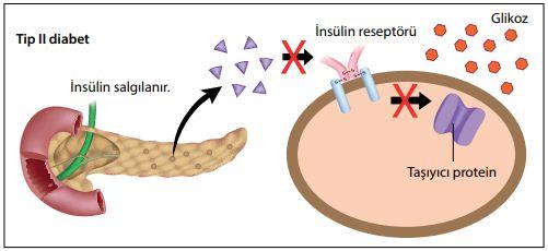 Tip II şeker hastalığında hedef hücrelerdeki reseptörler insüline karşı gerekli tepkiyi gösteremezler.